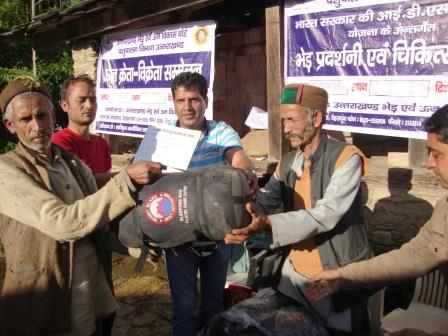 Prize Distribution In Sheep Exhibition