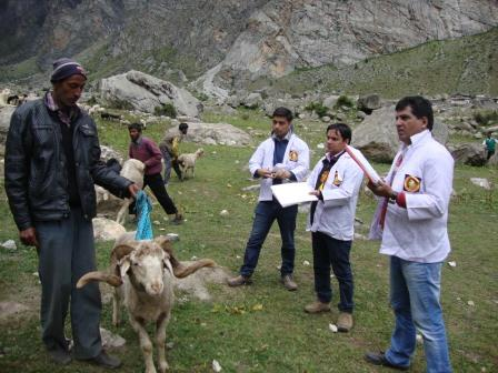 Judging a Sheep Show in Alpine Area