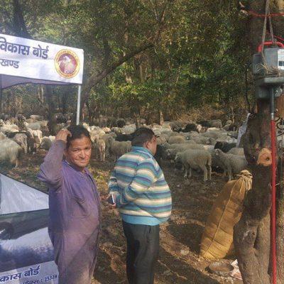 Sheep Shearing Camp, Gujrara