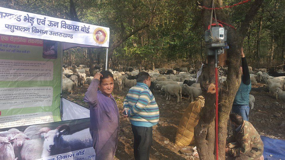 Sheep Shearing Camp, Gujrara