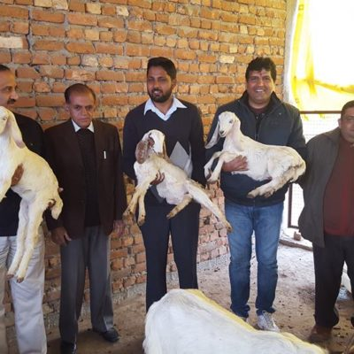 Bakristan, The Goat Farm Manglore, Haridwar